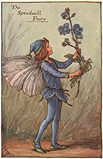 Speedwell Fairy by Cicely Mary Barker. Spring Flower Fairies - c1935 - Old Print - Antique Print - Vintage Print - Printed Prints of Flower Fairies