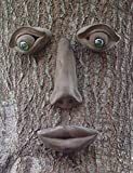 Geniune Tree Peeple Simon Tree Face