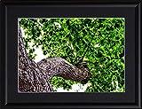 STAR DESIGN MORIE COLLECTION ~AROMA~ lm82 森の香り A4サイズ 【フレームセット】 A4 (210×297mm) morie 北海道 札幌市 北海道神宮 初夏 6月