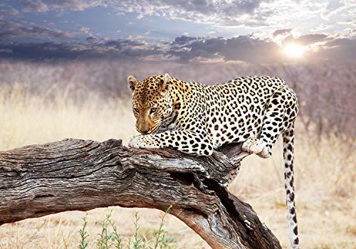 wandmotiv24 Fototapete Leopard Ast Savanne Himmel XL 350 x 245 cm - 7 Teile Fototapeten, Wandbild, Motivtapeten, Vlies-Tapeten tier Afrika M4814