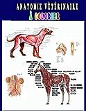 Anatomie Vétérinaire à Colorier: Un moyen plus simple et meilleur d'apprendre l'anatomie, Livre...