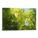 xizhuang Poster mit Buchenbäumen in der Eifel, dekoratives