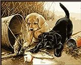 Dorara - Pintura al óleo para Adultos y niños, Pintura por número, Pintura al óleo Digital para Dos Perros Play Fun 16 x 20 Pulgadas
