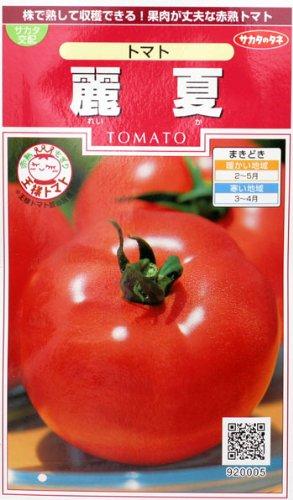 トマト サカタ交配 王様トマト麗夏 サカタの大玉トマト種です