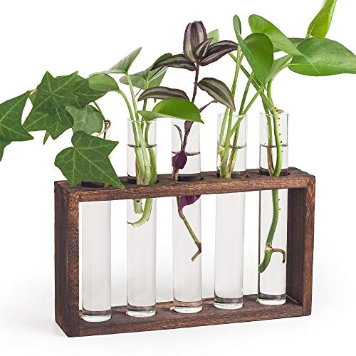Mealivos Plant Terrarium with Wooden Stand, Wall Hanging Glass Planter Propagation Station with 5 Test Tube,Flower Bud Vase Tabletop Glass Terrarium Wooden Stand