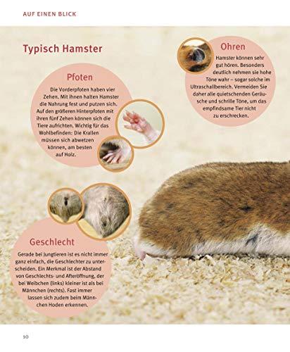 Hamster: Pflege-Einmaleins für kleine Solokünstler (GU Tierratgeber) - 8