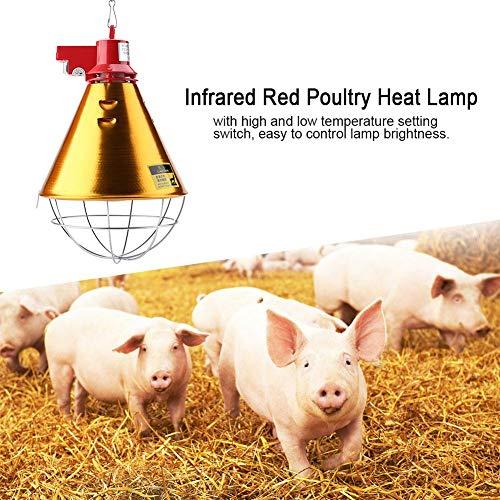 HEEPDD Lampada riscaldante Raggi infrarossi, lampade riscaldanti Prova Calore emettitore Calore apparecchiature Riscaldamento con Regolazione Hi-Low Lampadina per Pulcini maialini Agnello Conigli