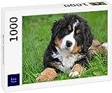 Lais Puzzle Perro de montaña de Bernese 1000 Piezas