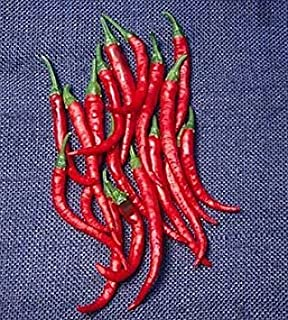 Best cayenne long slim hot pepper Reviews