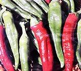 semi per coltivare peperone friariello sel barese semi per coltivare agricoli capsicum annuum peperoni friarielli 300 sementi circa alta qualità