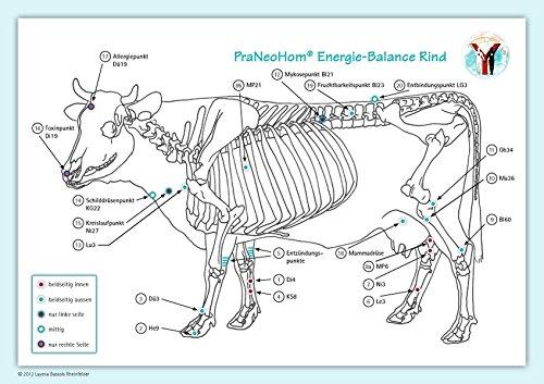Akupunktur-Tafel Rind/Kuh: PraNeoHom® Energiebalance durch Heilen mit Zeichen
