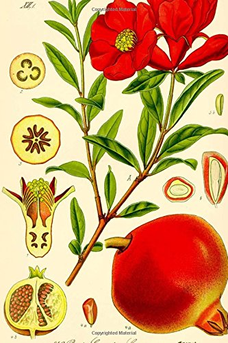 Punica Granatum Pomegranate Otto Wilhelm Thome Journal: Take Notes, Write Down Memories in this 150 Page Lined Journal