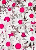 2017 nuovo 100 pc/sacchetto semi bonsai del crisantemo del fiore della margherita semi balcone ufficio interno piante in vaso per la casa garden 3