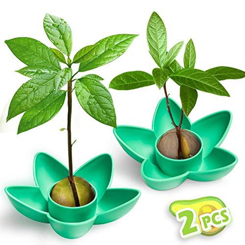 MOSRACY Avocado Pflanzen 2er Set,Garten Geschenk für Mama, Schwester und Beste Freundin, Beste Küche Garten Samen Starter Geschenk,Bestes Geburtstagsgeschenk für Freundin(Keine Samen)