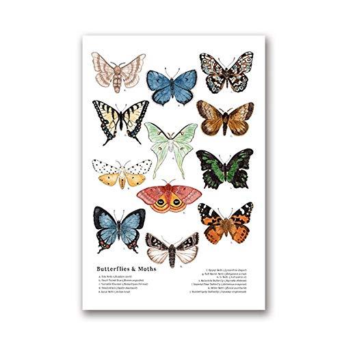 Poster de Mariposas y polillas Pintura de Naturaleza de Insectos Arte Educativo de Pared Póster e Impresiones de guardería Cuadros de habitación de niños Decoracion del hogar 50x70cmx1 Sin Marco