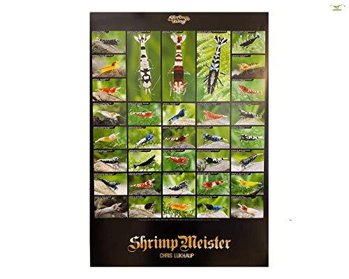 Chris Lukhaup Garnelen Poster Leinwand/Natur/Aquarium - groß - A1