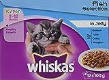 Kitten Foods