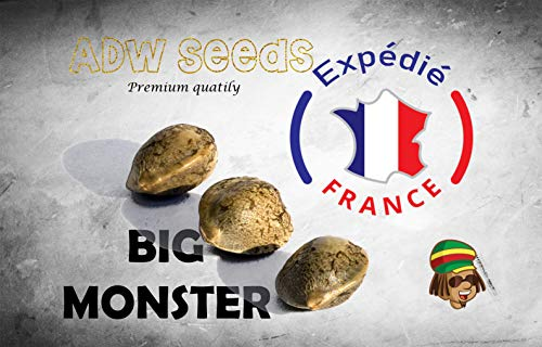 Originales BIG MONSTER x3 Graines ADW Seeds Expédition rapide depuis la France
