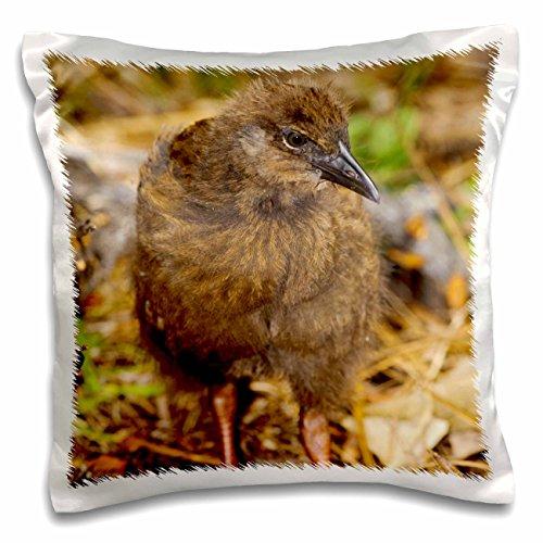 Danita Delimont - Birds - New Zealand, Stewart Island, Ulva Island, Weka bird-AU02 FNO0767 - Fredrik Norrsell - 16x16 inch Pillow Case (pc_70649_1)