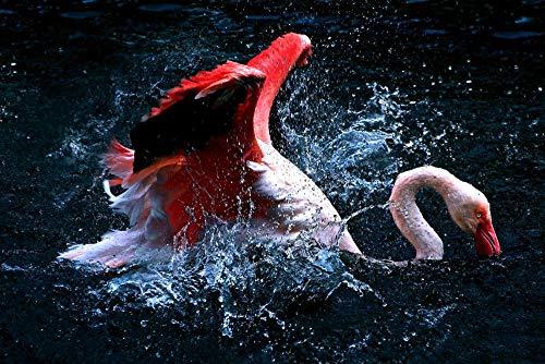 Pintura de diamante 5D Flamingo Water Spray Animales bordado de diamantes de...