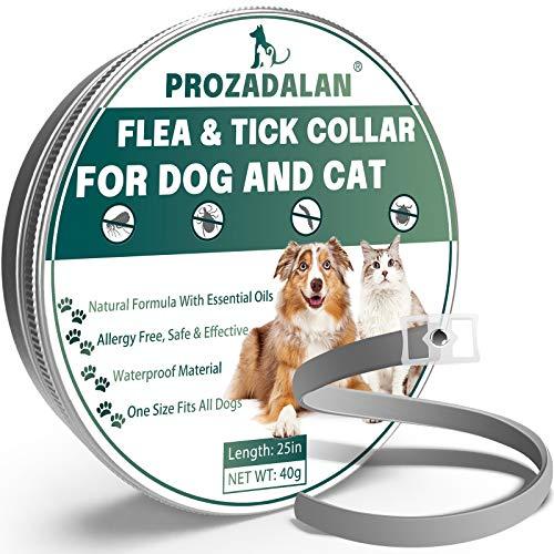 Collare Antipulci per Gatti,Collare Antipulci Cane, 100% Collare Antiparassitario Antizecche Regolabile, 63.5cm Regolabile per Cani Contro Antipulci Cane, Impermeabile, Respinge efficacemente pidocchi