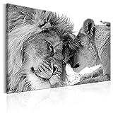 decomonkey Bilder Wandbilder Löwe Afrika Löwenpaar 120x80