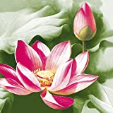 """INCLUDES: 20 premium Pink Lotus printed napkins SIZE: 6.5"""" x 6.5"""" (16.5cm x 16.5cm) when folded DURABLE: Strong 3-ply paper napkins, with a cloth-like feel PREMIUM PAPER: Made of 100% virgin paper ANY OCCASION: Perfect for cocktail parties, dinner pa..."""