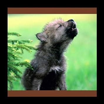 Волчата (Volchata)