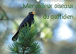 Merveilleux oiseaux du quotidien 2019: Le quotidien offre tant de merveilles naturelles au travers des oiseaux du jardin. (Calvendo Animaux) (French Edition)
