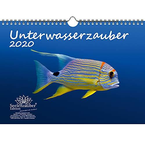 Unterwasserzauber DIN A4 Kalender 2020 Unterwasser Geschenk-Set: Zusätzlich 1 Gruß- und 1 Weihnachtskarte - Seelenzauber