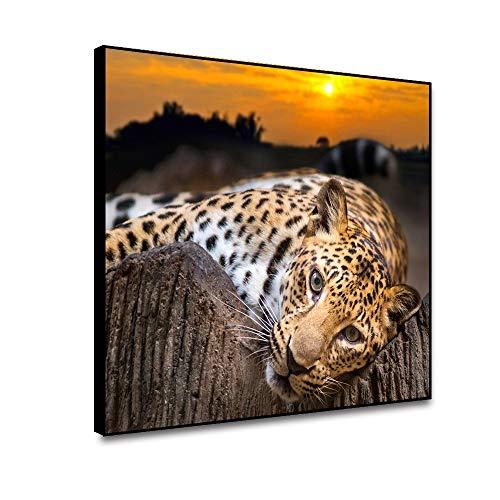 cheetah prints pictures - 2