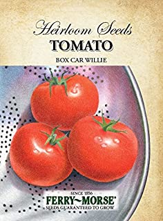 box car willie tomato