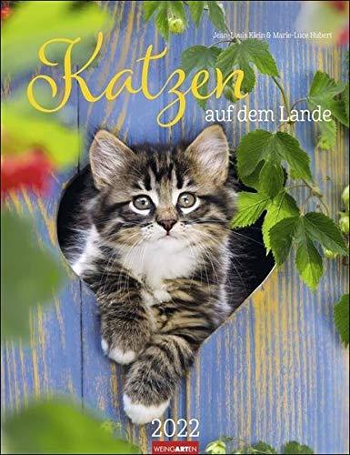 Katzen auf dem Lande Kalender 2022 - Tierkalender - Wandkalender mit Monatskalendarium - Planer mit Platz zum Eintragen - 12 Farbfotos - 30 x 39 cm