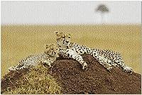 HDケニア-マサイマラ国立ゲーム保護区9028344(52x38cmの大人向けプレミアム500ピースジグソーパズル)のマウンドにチーターが横たわる