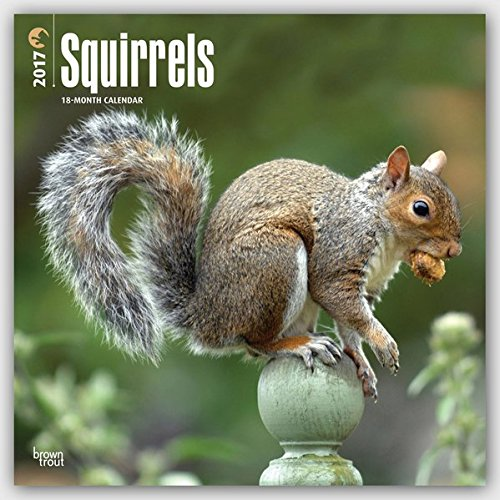Squirrels 2017 Square