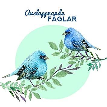 Avslappnande fåglar: Naturmusik för sömn, Avkoppling och meditation