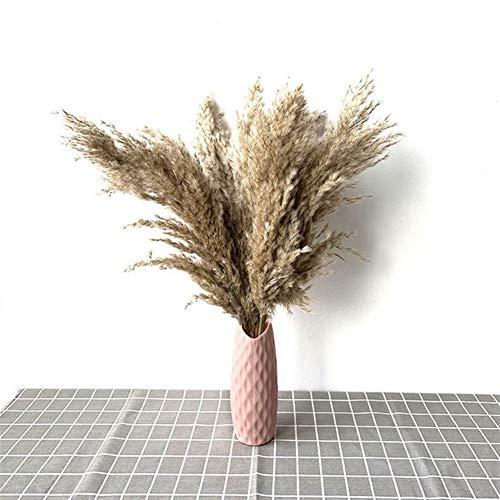Victor Johnsond Pampasgras Dekor Pflanzen nach Hause Hochzeitsdeko getrocknete Blumen Strauß Feder Blumen natürliches phragmites groß 20-22 '' PlastikVase (Color : 10pcs raw pink vase)