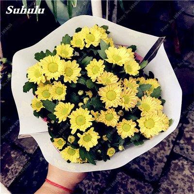 Grosses soldes! 50 Pcs Daisy Graines de fleurs crème glacée parfum de fleurs en pot Chrysanthemum jardin Décoration Bonsai Graines de fleurs 17
