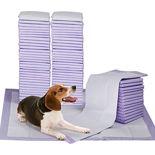 Scented Dog Training Pad With Attractant