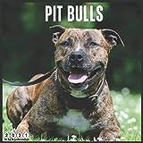 Pit Bulls 2021 Wall Calendar: Official PitBull 2021 Calendar 18 Months