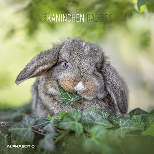 Kaninchen 2022 - Broschürenkalender 30x30 cm (30x60 geöffnet) - Kalender mit Platz für Notizen - Rabbits - Bildkalender - Wandplaner - Wandkalender