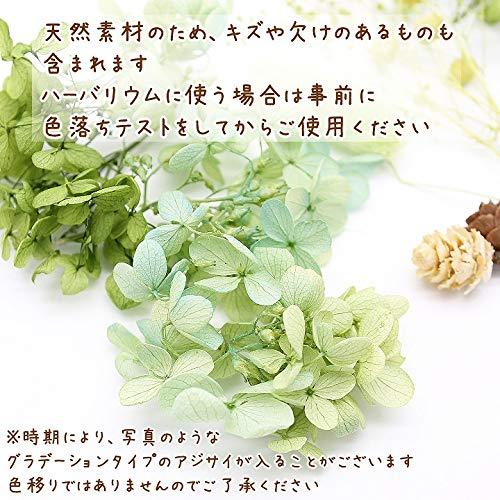 ガーデングリーン花材セット手芸クラフトハーバリウム花材アロマワックスサシェプリザーブドフラワーアジサイカスミ草ラグラス
