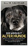 Die Weisheit alter Hunde: Gelassen sein, erkennen, was wirklich zählt – Was wir von grauen Schnauzen über das Leben lernen können