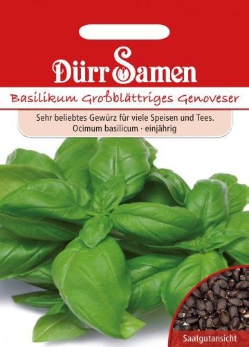 Dürr Samen Großblättriger Genoveser (Basilikumsamen)