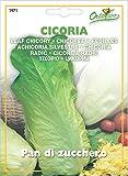 Hortus 29CIC1971 Maxi Busta Ortovivo Cicoria Pan di Zucchero, 12x0.2x16.5 cm