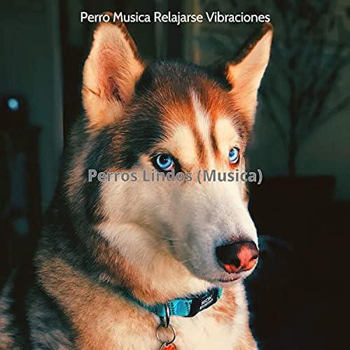 Perro Musica Relajarse Vibraciones