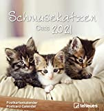 Schmusekatzen 2021 - Postkarten-Kalender - Kalender-mit-Postkarten - zum-raustrennen - 16x17: Cats
