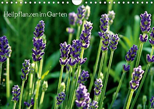 Heilpflanzen im Garten (Wandkalender 2021 DIN A4 quer)