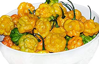 30+ ORGANICALLY Grown Yellow Scotch Bonnet Jamaican Hot Pepper Seeds Heirloom Non-GMO Spicy, from USA