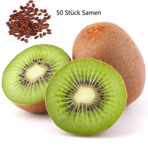 KEPTEI Garten Obst 50 Stücke Kiwi-samen Kiwifrüchte Actinidia chinensis Obstbaum